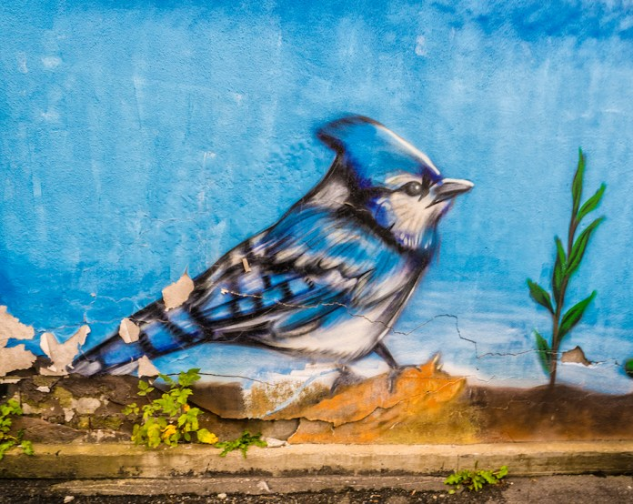 Blue Jay – Street Art in Ottawa, Canada