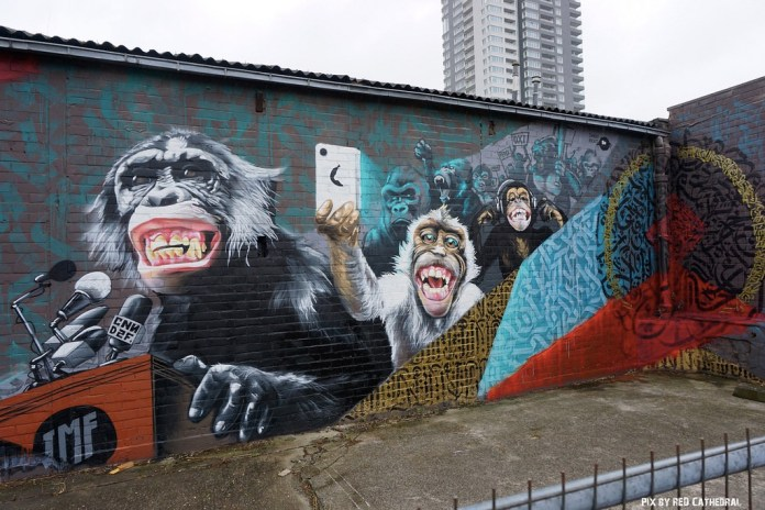 IMF Monkeys – In Brussels, Belgium