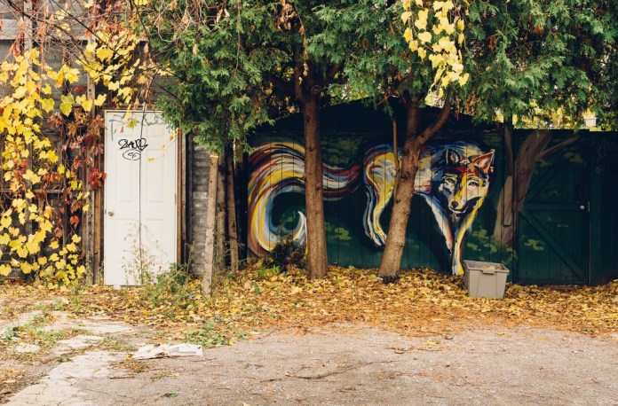 Wolf – Street Art in Toronto, Canada