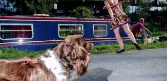 Doggie hula hoop