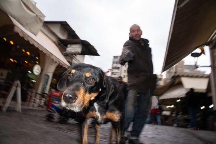 """Animals"" Street Photograph by Akis Tachmatzidis"