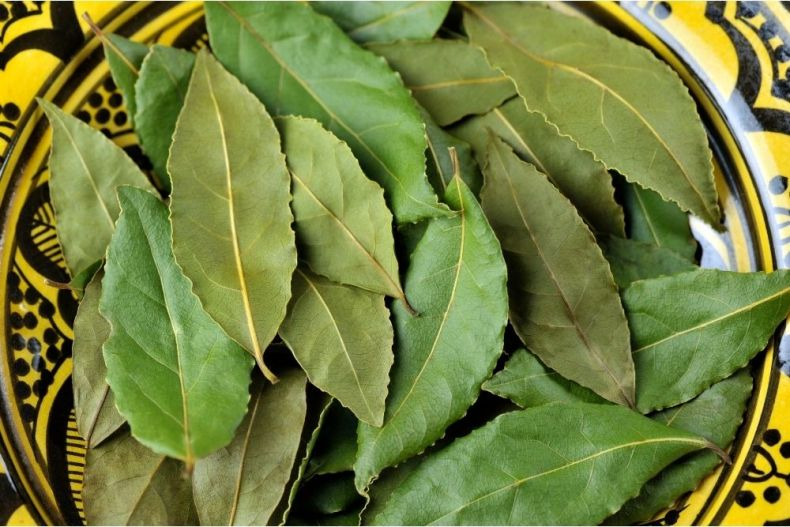fresh bay leaves on a plate