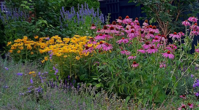 Native Plants Bring All the Birds to the Yard
