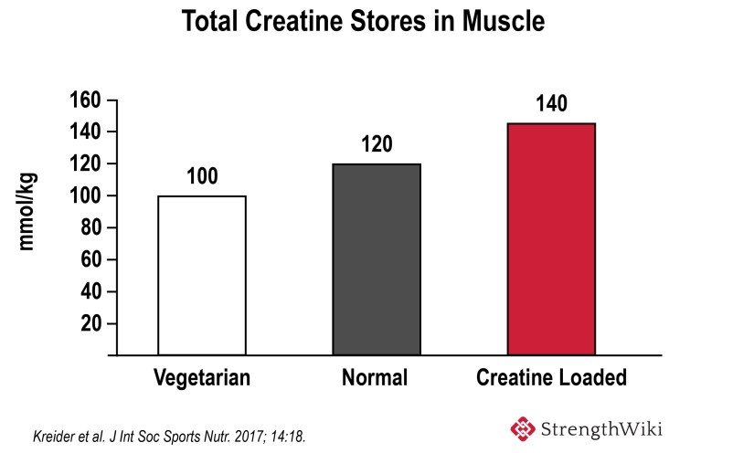 Total muscle creatine content
