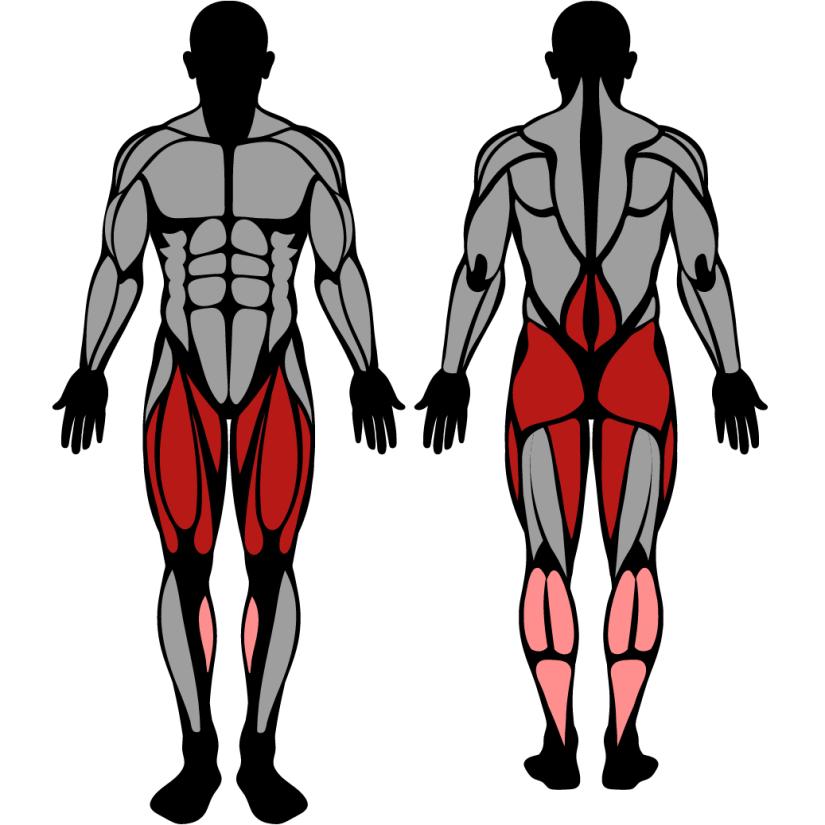Muscles worked in the squat