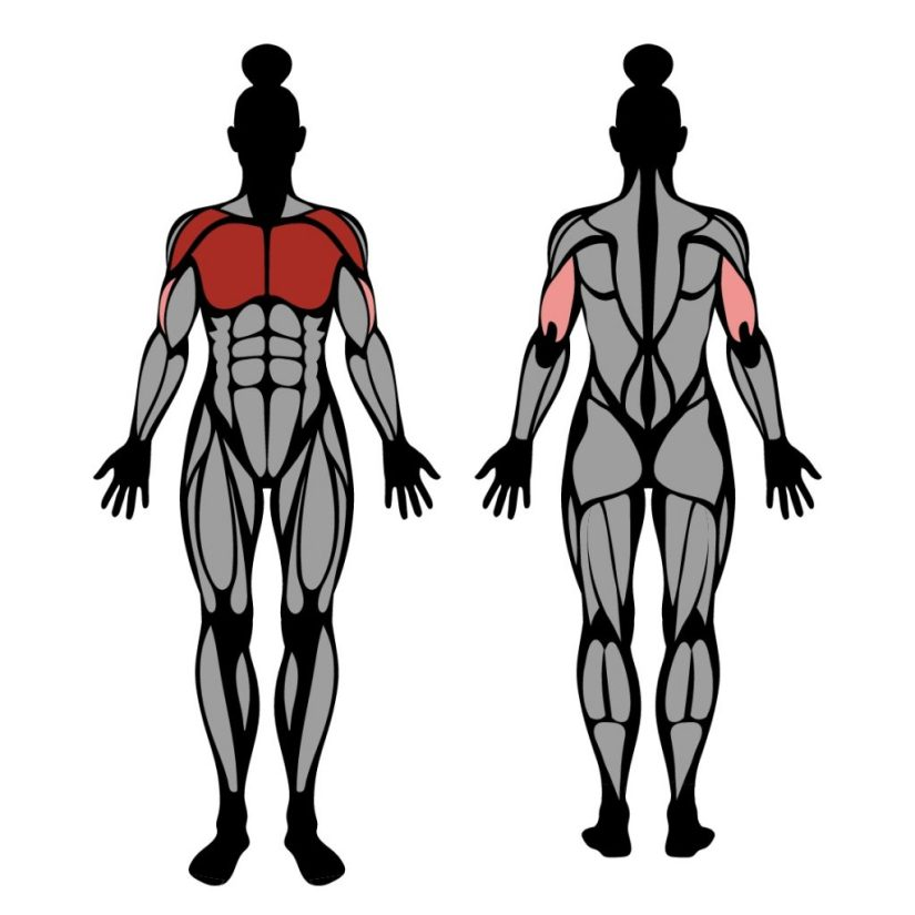 Muscles worked in the bench press feet up exercise