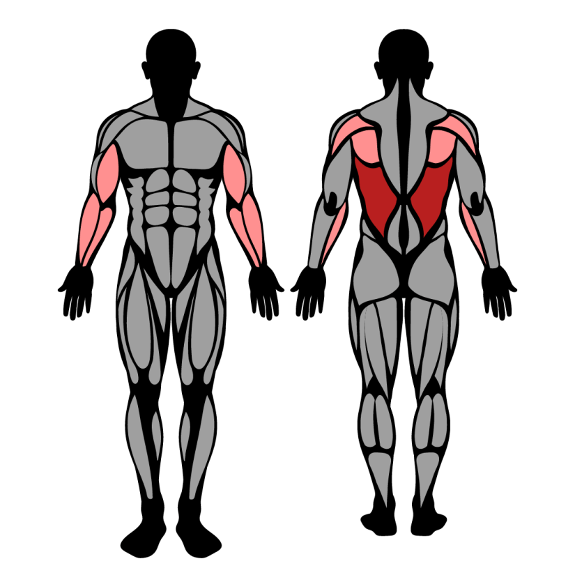 Muscles worked in One-Handed Lat Pulldown