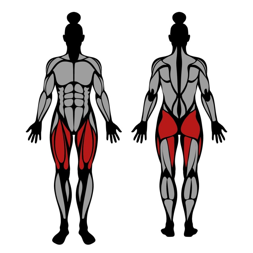 Muscles worked by bodyweight lunge