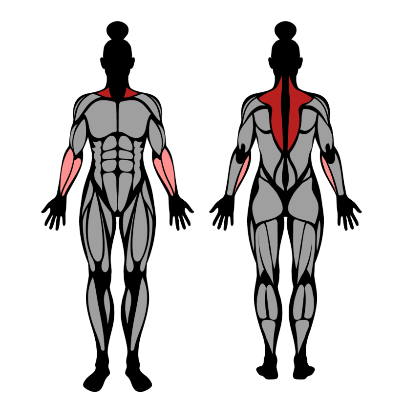 Muscles worked by dumbbell shrug