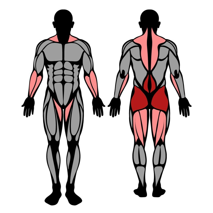 Muscles worked in hang power cleans