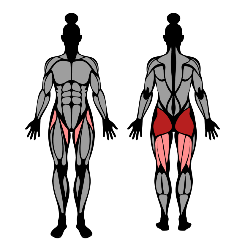 Muscles worked in hip thrust with bands around knees