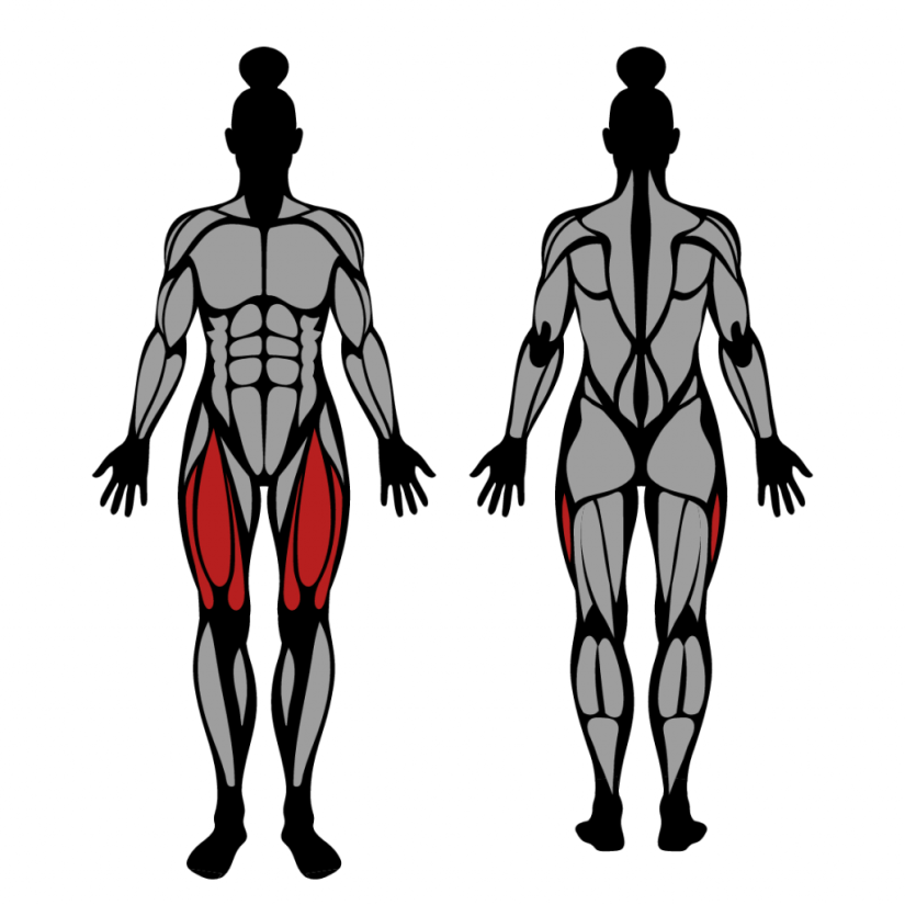 Muscles worked by leg extensions