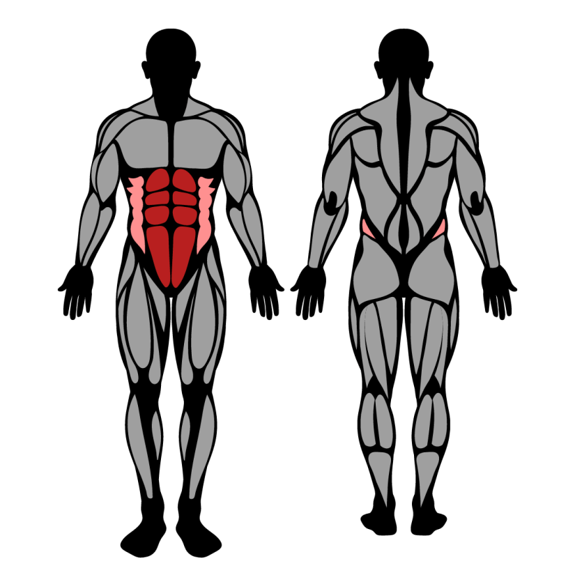 Muscles worked by lying leg raises
