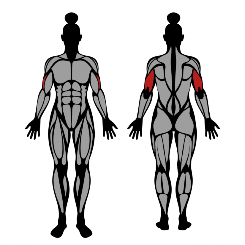 Muscles worked by lying triceps extension