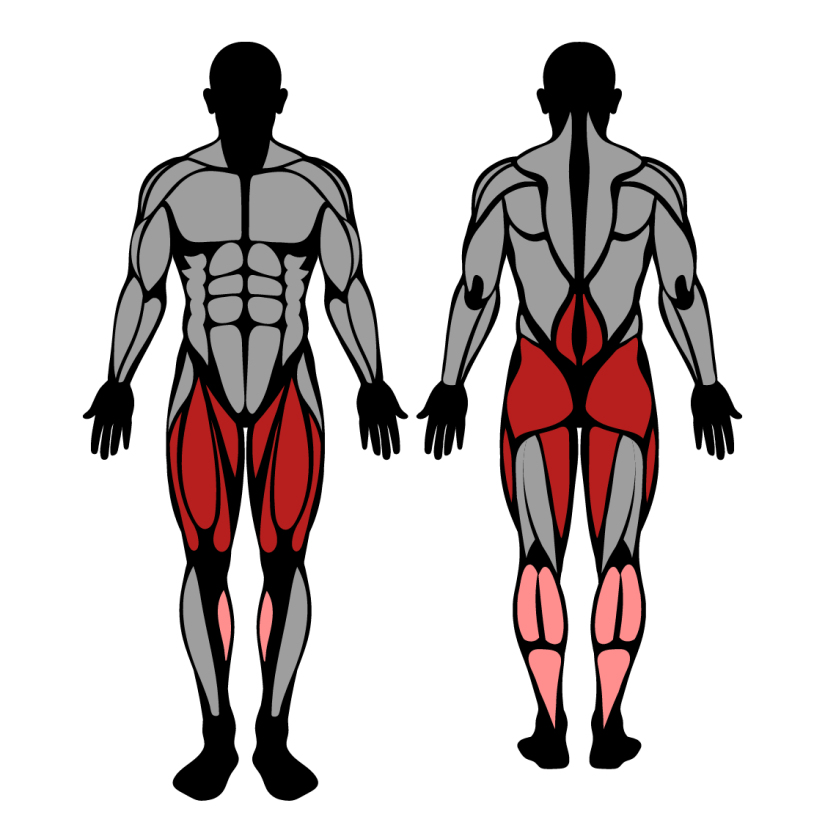 Muscles worked by pause squat