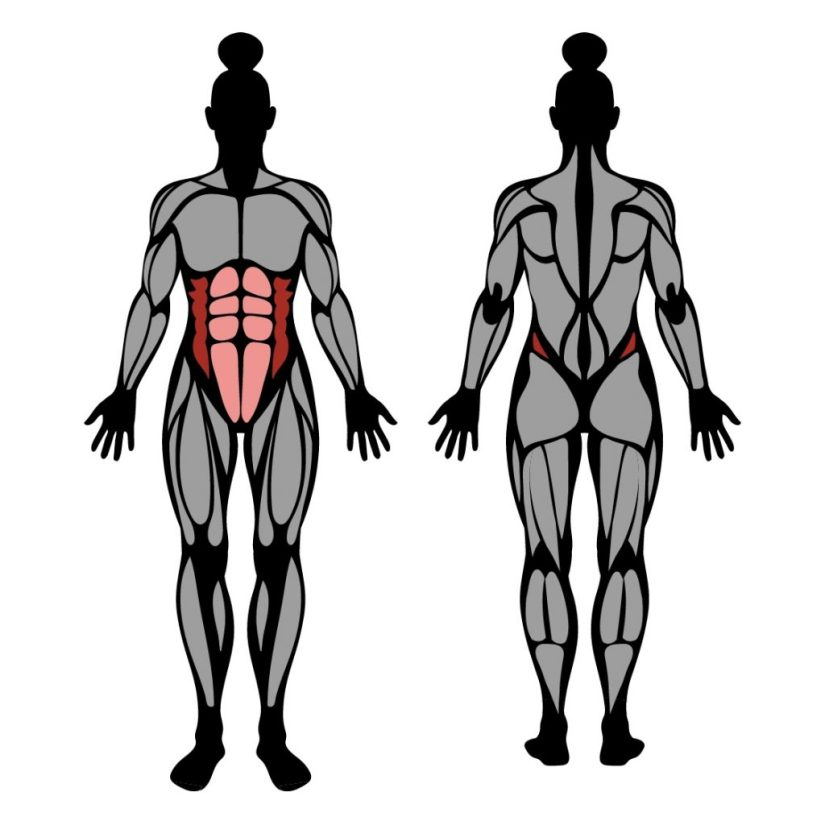Muscles worked by side plank exercise