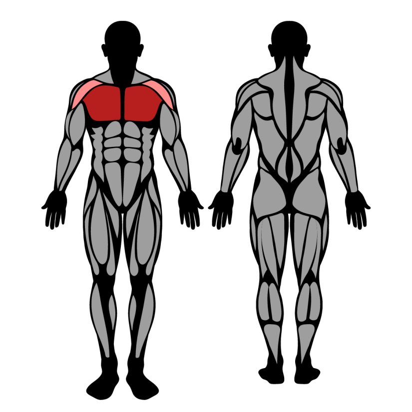 Muscles worked in standing cable chest fly