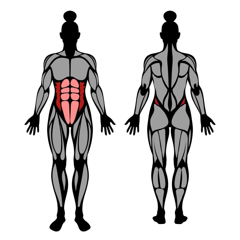 Muscles worked by lying windshield wiper with bent knees