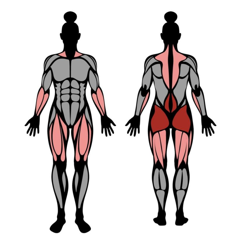 Muscles worked in the barbell deadlift exercise