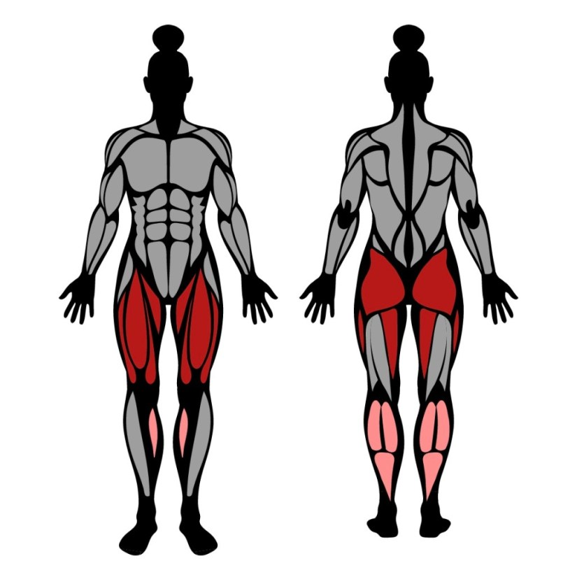Muscles worked by chair squats