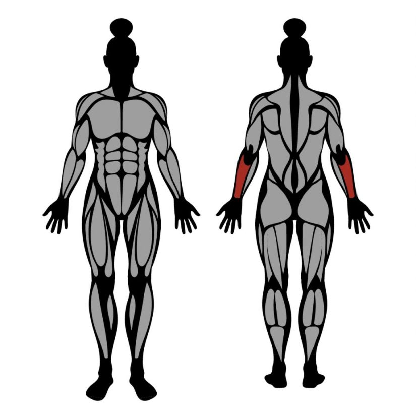 Muscles worked by dumbbell wrist extension exercise