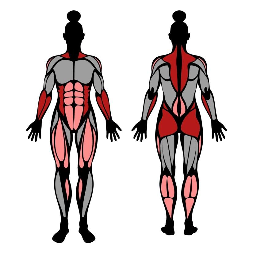 Muscles worked by farmers walk