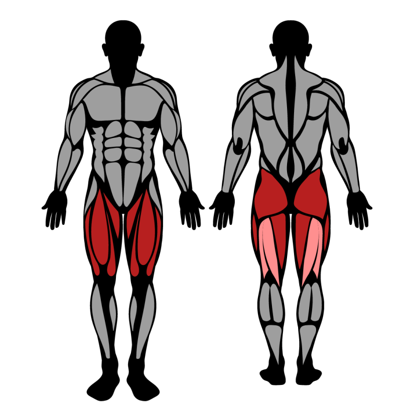 Muscles worked in step ups