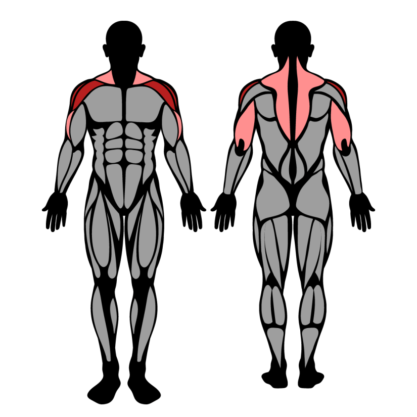 Muscles worked in snatch grip behind the neck press