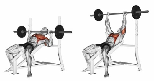 Incline bench press anatomical illustration