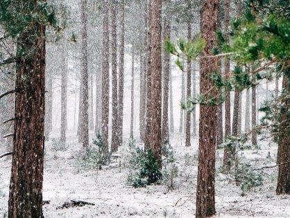 8. December - Stressjulekalenderen