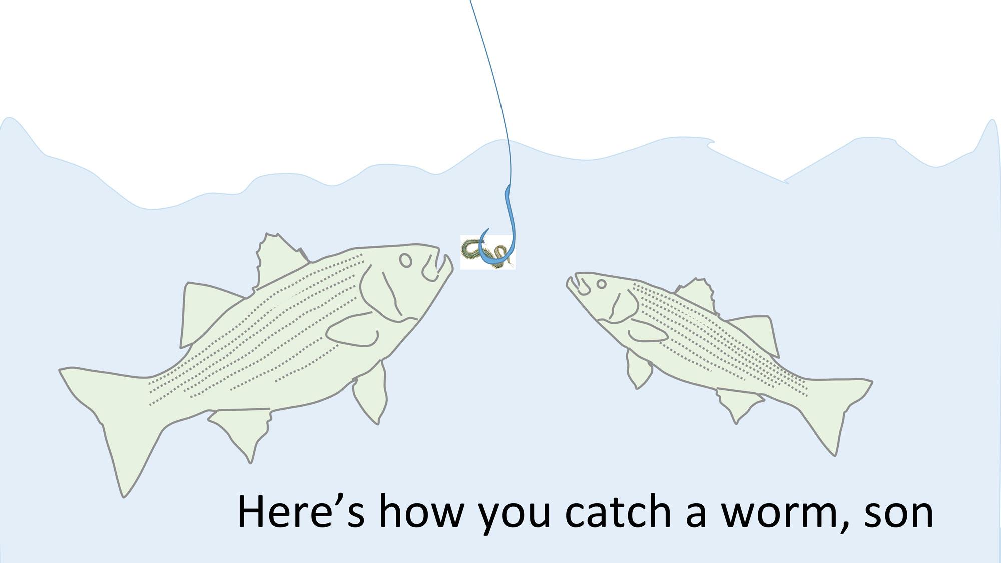Cartoons Striped Bass Magic