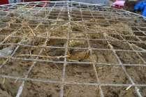 big-strawbale-workshop-ernstbrunn-02-164