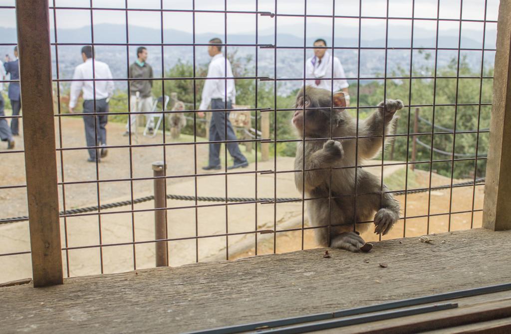 Baby monkey at Iwatayama