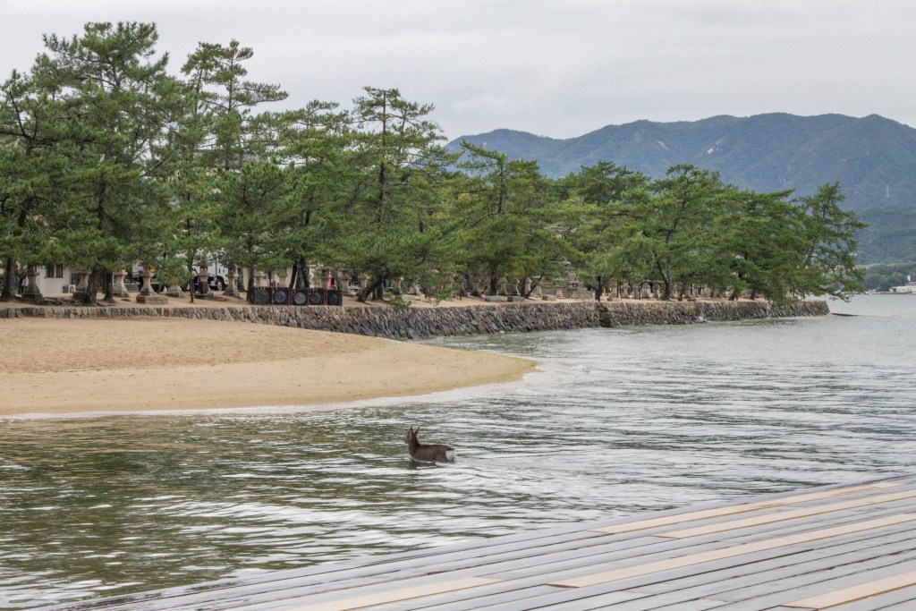 deer in Miyajima