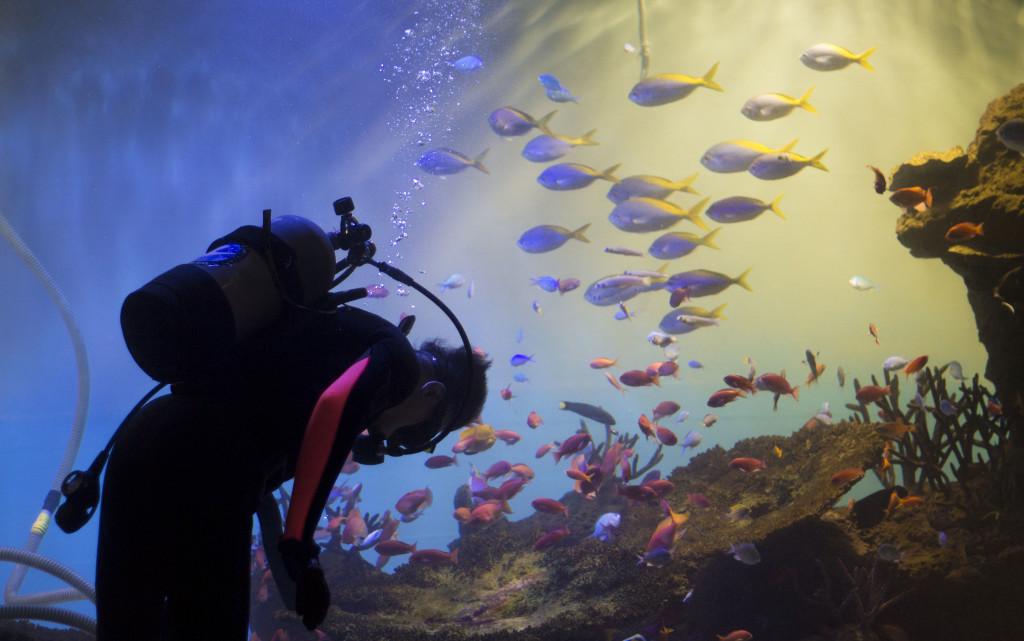Miyajima Aquarium