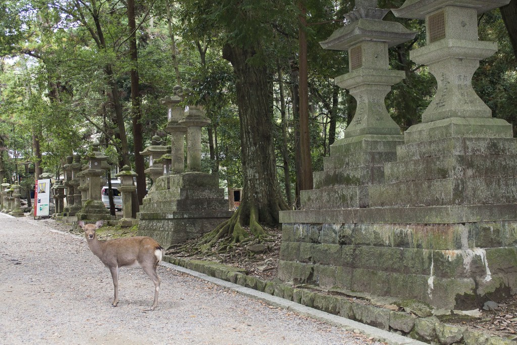 afternoon in Nara