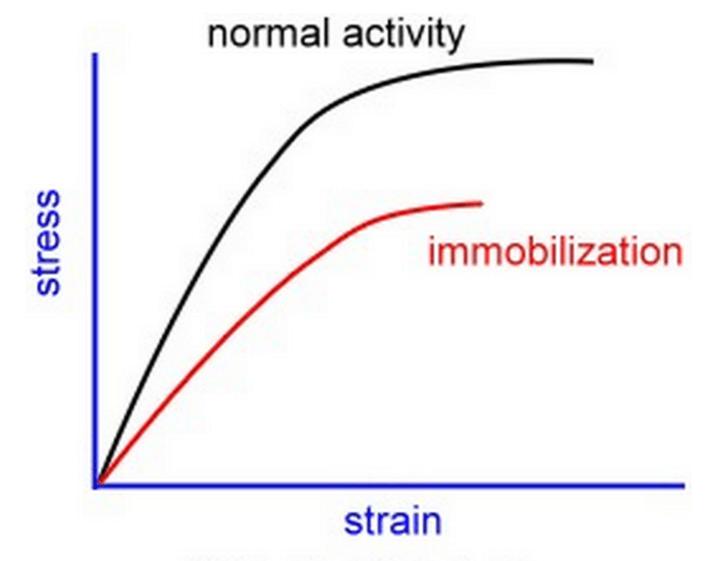 comparative steroid potencies