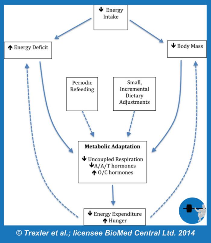 A basic theoretical model of metabolic adaptation