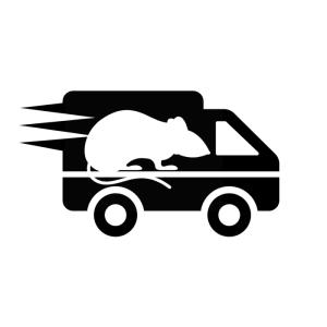Transport szczurów, gryzoni hodowla szczurów rodowodowych