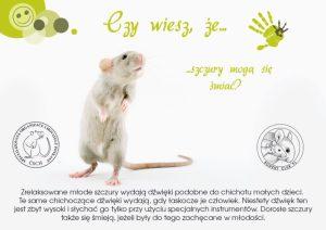 Ciekawostki, hodowla szczurów szczury mogą się śmiać