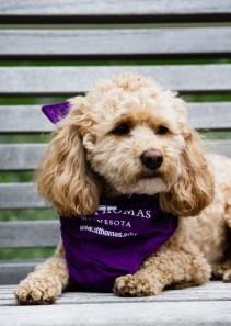 Keeke the dog sports a purple bandana.