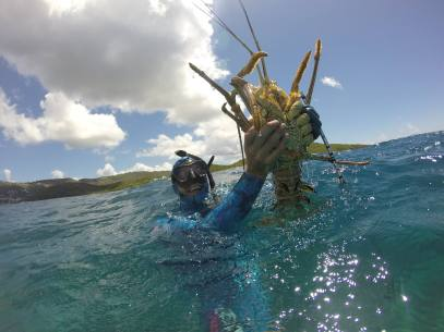 lobster hunt st thomas