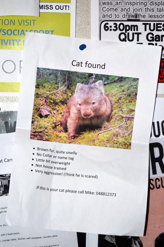 cat found poster