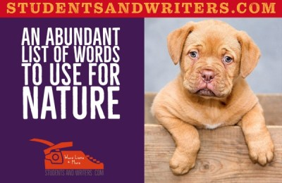 Read more about the article An abundant list of words to use for nature