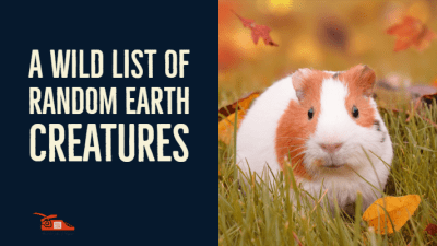 Read more about the article A wild list of random earth creatures