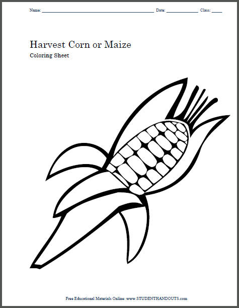 Harvest Corn or Maize Coloring Sheet for Kids or Craft