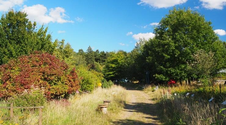 Path in Nieklitz