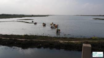 Harvesting Crabs