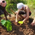 Planting circular permaculture garden in Solitude Farm