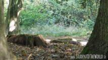 tree stump in Hambacher Forst